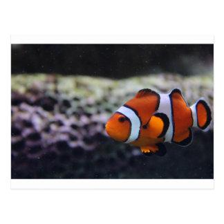 Nemo like cousin postcard
