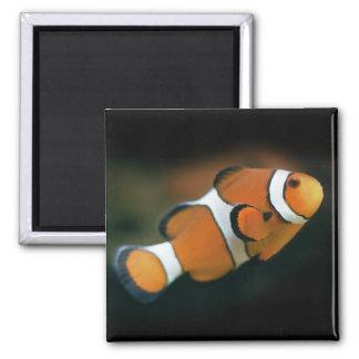 Nemo Magnet
