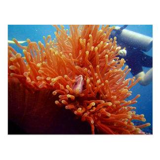 Nemo Postcard