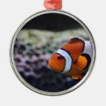Nemo tiene gusto del primo adorno para reyes