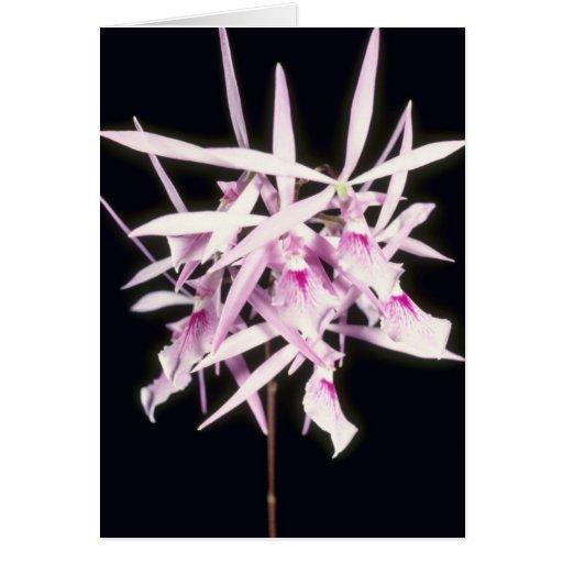 Nemorale rosado, del cierre flores para arriba (Ep Felicitación