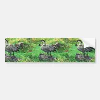 Nene Geese (Hawaiian) Bumper Sticker