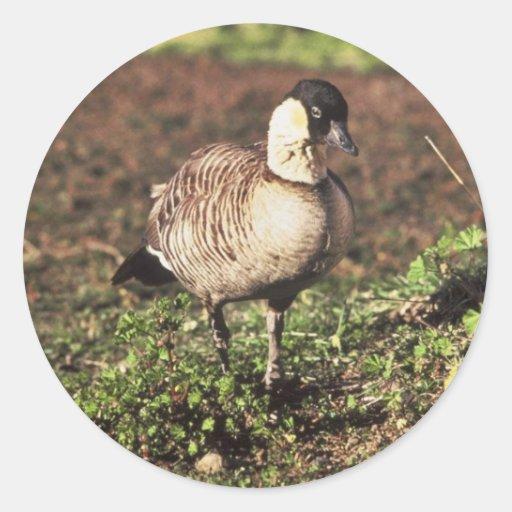 Nene Goose (Hawaiian goose) Classic Round Sticker