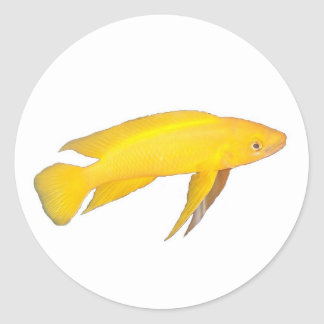 Neolamprologus leleupi classic round sticker