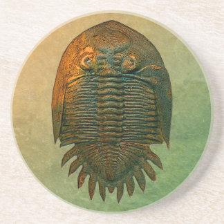 Neometacanthus Fossil Trilobite Coaster