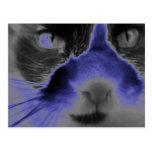 Neon Cat Blue Postcards