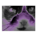 Neon Cat Purple Post Card