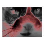 Neon Cat Red Post Card