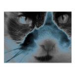 Neon Cat Turquoise Postcards