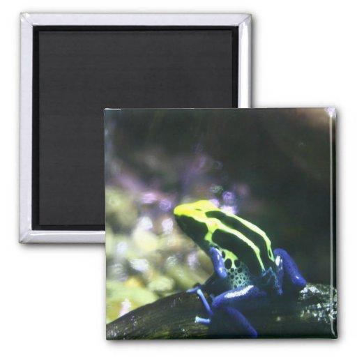 Neon Frog Magnet