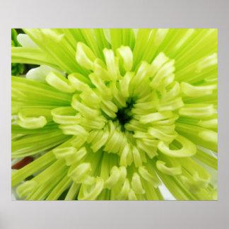 Neon Green Flower Football Mum Close Up Background Poster