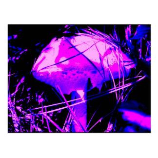 Neon Mushroom Post Card