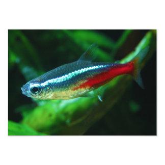 Neon Tetra Fish Paracheirodon Innesi Card