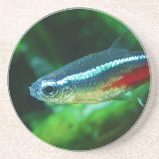 Neon Tetra Fish Paracheirodon Innesi Beverage Coasters