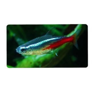 Neon Tetra Fish Paracheirodon Innesi Label