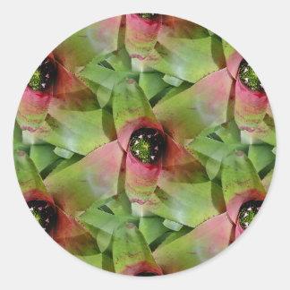 Neoregelia Bromeliad 'Tossed Salad' Classic Round Sticker