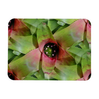 Neoregelia Bromeliad 'Tossed Salad' Rectangle Magnets