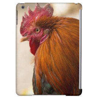 Nepal Rooster standing in Namche Bazaar Cover For iPad Air