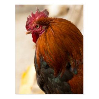 Nepal Rooster standing in Namche Bazaar Postcard