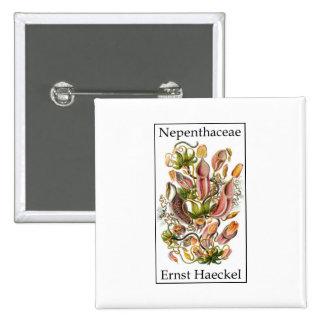 Nepenthaceae de Ernst Haeckel Pin Cuadrado