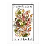 Nepenthaceae de Ernst Haeckel Tarjetas Postales