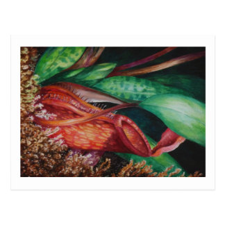 Nepenthes Of Borneo Watercolor Art Postcard