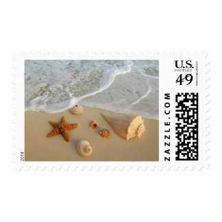 Neptune's Gifts (Shells) Postage