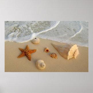 Neptune's Gifts (Shells) Print