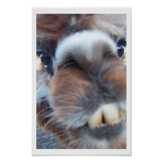 Nerdy Llama Print