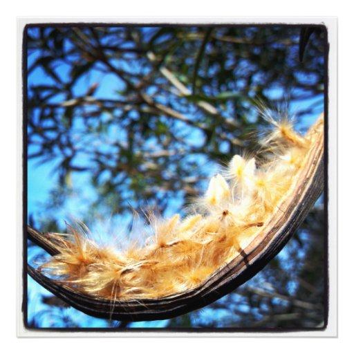 Nerium Oleander Seed Pod Color Photo Print