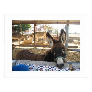 Nerja Donkey Sanctuary Postcard