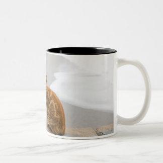 nerja malaga andalusia spain Two-Tone coffee mug