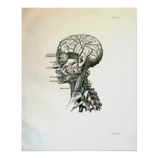Nerves of the Head Poster