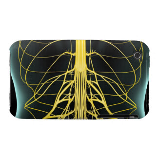 Nerves of the Lower Back iPhone 3 Cases