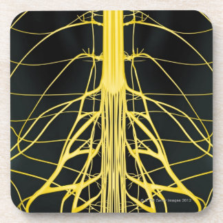 Nerves of the Lower Back Drink Coaster