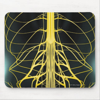 Nerves of the Lower Back Mouse Pad