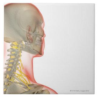 Nerves of the Neck 2 Ceramic Tile