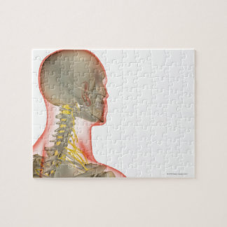 Nerves of the Neck 2 Jigsaw Puzzle