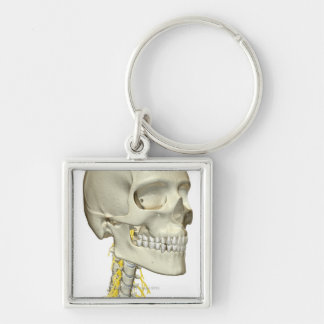 Nerves of the Neck Keychain