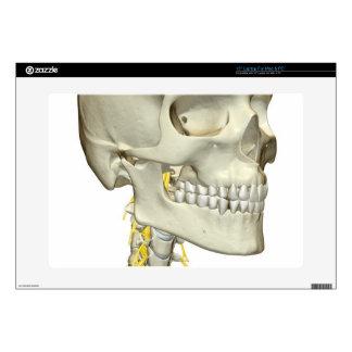 Nerves of the Neck Skins For Laptops