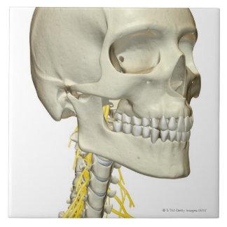 Nerves of the Neck Tile