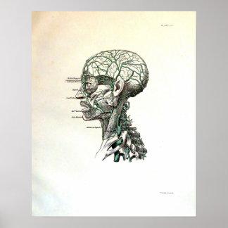 Nervios de la cabeza posters