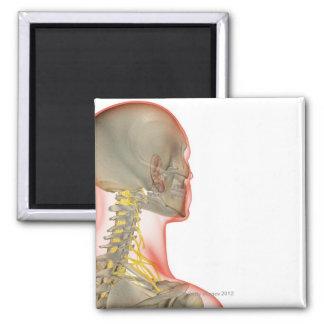 Nervios del cuello 2 imán cuadrado