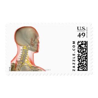 Nervios del cuello 2 timbre postal