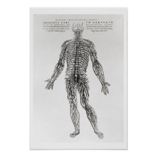 Nervous System (b/w print) Poster