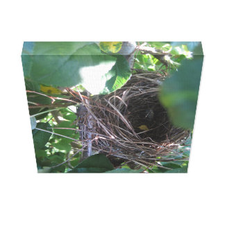 Nest in a Tree Canvas Art