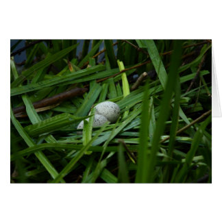 nest of a bald coot stationery note card
