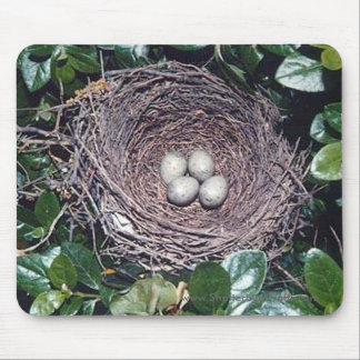 nest of bluejay eggs, mouse pad