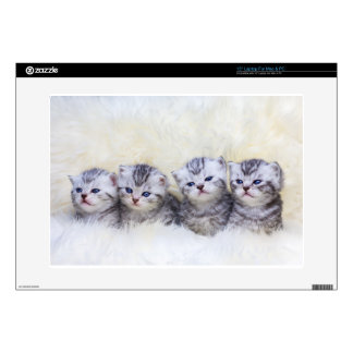 Nest with four young tabby cats in a row skin for laptop