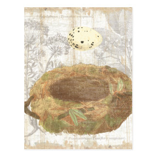 Nest with Speckled Egg Postcard